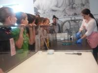 Fotorelacja z wycieczki do Muzeum Lizaka w Jaśle i z warsztatów pieczenia pizzy w Pizzerii Vesuvio